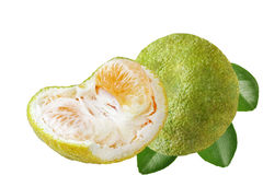 Jamaica Ugli Grapefruit Stock Photos