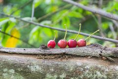 Jamaican cherry Stock Images