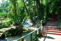 Jamaican Gardens Royalty Free Stock Photography