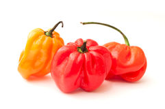 Jamaican peppers Royalty Free Stock Photo