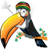 Jamaican toucan cartoon Stock Images