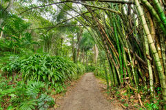 Jamaikanischer Dschungel Stockfoto