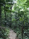 Jamaikanischer Dschungel Lizenzfreie Stockfotos