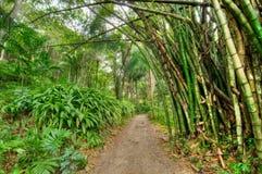 Jamaikansk djungel Arkivfoto