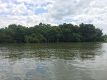 Jamaikanska mangrovar Royaltyfri Bild