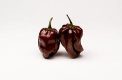 Jamajski Gorącej czekolady pieprz Zdjęcie Stock