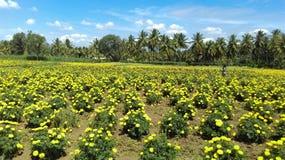Jamandi blommaträdgård Royaltyfri Fotografi