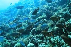 Jamb of sea fish. At the bottom Royalty Free Stock Photo