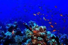 Jamb of sea fish Stock Photo