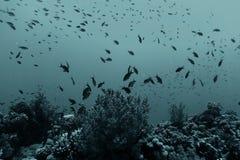 Jambage du poisson de mer image libre de droits