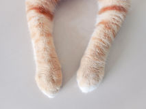 Jambe de chat Images stock