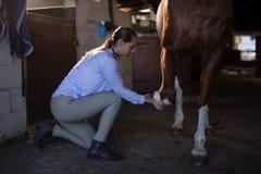Jambe de examen de cheval de vétérinaire féminin dans l'écurie images libres de droits