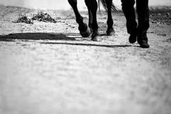 Jambes d'un homme et des sabots d'un cheval marchant tout près images libres de droits