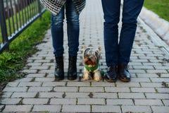Jambes dans les couples d'amour et leur petit chien Image stock