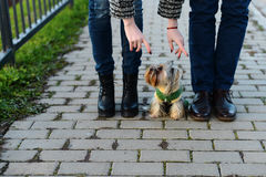 Jambes dans les couples d'amour et leur petit chien Images stock