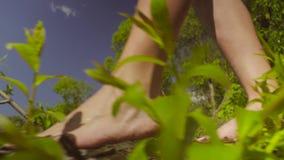 Jambes de jeune femme marchant sur une branche d'arbre banque de vidéos