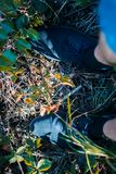 Jambes du ` s d'hommes dans des espadrilles en parc sur l'herbe Photographie stock