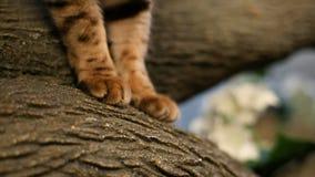 Jambes et pieds de chats banque de vidéos