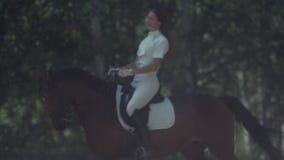Jambes et sabots du cheval s dans le mouvement Le cheval va et soulève le passage de la poussière banque de vidéos