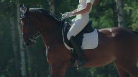 Jambes et sabots du cheval s dans le mouvement Le cheval va et soulève le passage de la poussière clips vidéos
