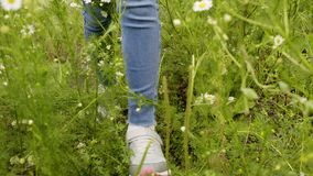 Jambes femelles dans des espadrilles marchant sur le champ de marguerite au jour d'été Jeune femme marchant par les fleurs fleuri banque de vidéos