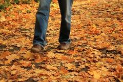 Jambes humaines marchant sur les feuilles tombées jaunes en automne Image stock
