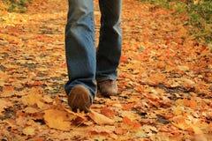 Jambes humaines marchant sur les feuilles tombées jaunes en automne Photos libres de droits