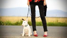 Jambes sexy avec le chiot doux de bull-terrier Photo stock
