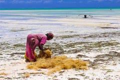 Jambiani Zanzibar coconut work royalty free stock photo