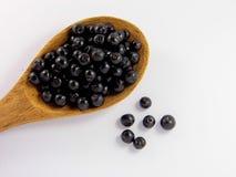 Jambolan plum or Java plum Stock Images