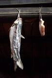 Jambon et poissons conservés Photographie stock