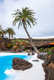 Jameos del Agua pool in volcanic cave, Lanzarote Royalty Free Stock Photography
