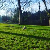 james Λονδίνο πάρκο ST Στοκ Φωτογραφίες