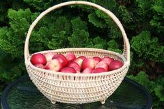 James Grieve äpplen i korg Arkivfoto