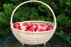 James Grieve apples in basket. Swedish apples - James Grieve - standing in garden Stock Photo