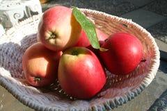 James Grieves-appelen - een zeer populaire appel voor baksel en keuken te gebruiken maar ook als snacks voor vitaminen en gezondh Stock Foto's