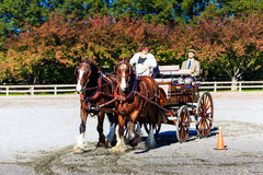 Free James River Driving Association Event In Staunton Va Stock Photography - 73713422