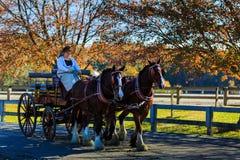 James River Driving Association händelse i Staunton Va Royaltyfria Bilder
