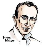 James Watson Portrait. James Watson watercolor vector portrait with ink contours. American molecular biologist, geneticist and zoologist stock illustration