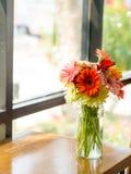 Jamesonii del Gerbera en florero de los vidrios imágenes de archivo libres de regalías