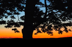 Jamestown, New York Sunset Orange. Jamestown, New York Sunset Tree Royalty Free Stock Photo