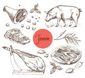 Jamon set. Black Iberian Pig, Jamon, Meat, Beef, spices for meat. Vector illustration in Vintage engraving style. Can be used for Stock Photo