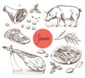 Jamon set Czarna Iberyjska świnia, Jamon, mięso, wołowina, pikantność dla mięsa Wektorowa ilustracja w rocznika rytownictwa stylu ilustracja wektor