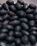 Jamun or Black plum stock photography