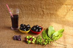 Jamun juice glass and bowls of Jamun fruit or black plum, raw Jamun fruits, leaves and seeds royalty free stock image