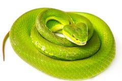 jamy zielona żmija Zdjęcia Royalty Free
