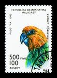 Jandaya Parakeet (Aratinga jandaya), Parrots serie, circa 1993. MOSCOW, RUSSIA - NOVEMBER 26, 2017: A stamp printed in Madagascar shows Jandaya Royalty Free Stock Photo