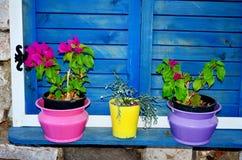 A janela azul rústica com obturadores azuis e o potenciômetro colorido floresce Fotografia de Stock