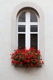 Janela branca com o vaso de flores vermelhas Imagem de Stock