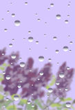 Janela chuvosa com lilás Fotografia de Stock